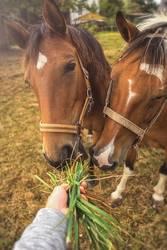 Pferd wird gefüttert
