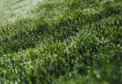 Es grünt das Gras