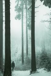 Männlein im Walde