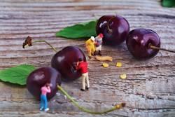 Miniwelten - gut Kirschen essen?