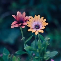 orange flower plant in springtime