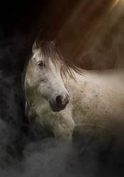 beautiful white horse portrait in the nature