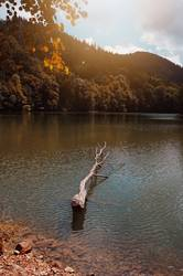 trees with autumn colors in the lake in autumn season