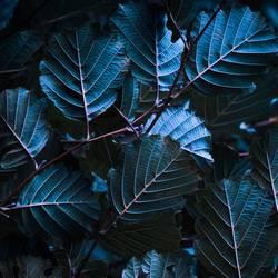 plant leaves texture