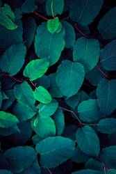 green and blue plant leaves textured in autumn