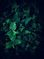 beautiful green plant leaves texture in the garden