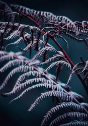 abstract fern plant leaves in the nature