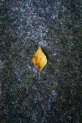 yellow leaf with autumn colors on the gray ground