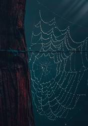 drops on the spider web