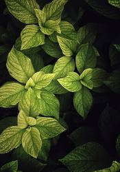 green plant leaves