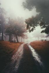 road and trees in the forest with fog in the mountain