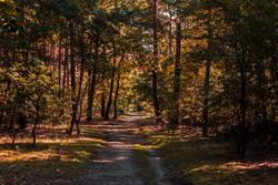 Waldweg in herbstlichem Wald