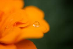 oranger Tropfen