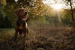Hund im grünen Wald mit Gegenlicht