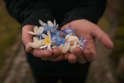 Eine handvoll Blüten