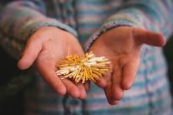 Kinderhände halten Strohstern