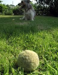 Ball mit Hund