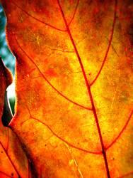 Herbstmode .:!!:.