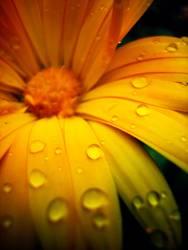 Feuchter Blütentraum