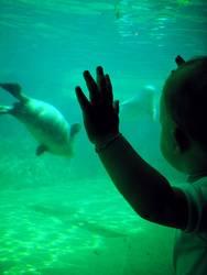 Sophies (Unterwasser-)Welt [2]