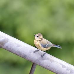 Vogel mit Perspektive