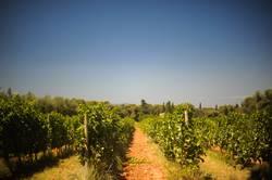 Weinplantage eines Klosters am Mittelmeer
