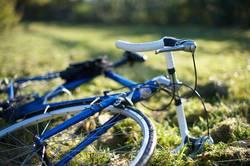 Blaues Fahrrad auf grüner Herbstwiese