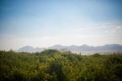 Landschaft mit Sträuchern vor Meerpanorama mit Bergen