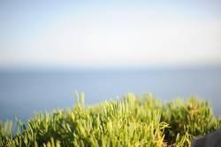Leuchtend grünes Gras vor Meerpanorama am Horizont