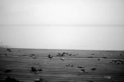 Herbstlaub auf einem Steg, das andere Seeufer am Horizont