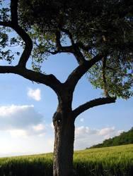 Einsamer Baum II