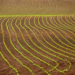 Bauernkreativbewegung