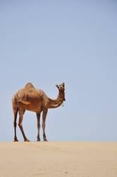 thar desert II