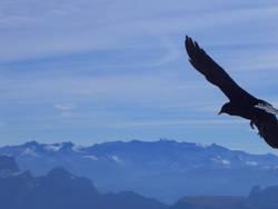 Portrait eines fliegenden Vogels