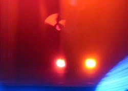 Lichtkörper 1