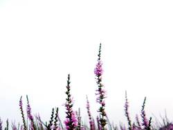 Blütenpracht [6]