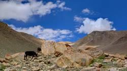 das zauberhafte Ladakh, Land der hohen Pässe