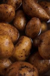 Kartoffel | Festkochend (2)