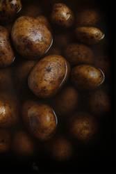 Kartoffel | Festkochend (1)