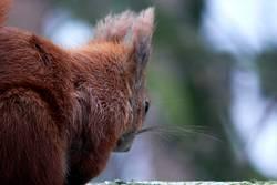 Squirrel … unser kleiner Freund