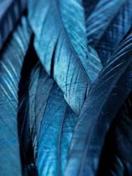 Blauschimmer