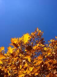 Ein Tag im Herbst ²