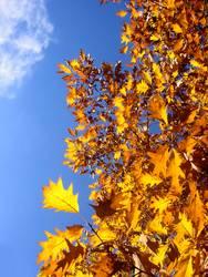 Ein Tag im Herbst ³