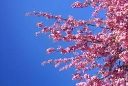 Ein Tag im Frühling
