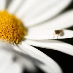 Auch Insekten chillen
