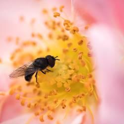 Von wegen fleißiges Bienchen!