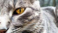 a green cat eyes close up