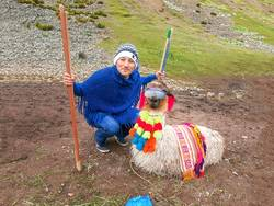 View of a funny alpaca with sunglasses and a tourist