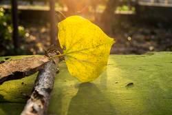 leuchtendes Herbstblatt auf einer bemoosten Bank im Sonnenlicht