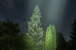 leuchtende Bäume im Vollmondlicht